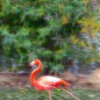 Фламинго :: nakip1