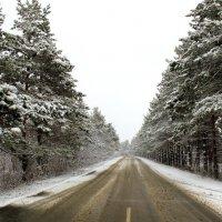 Дорога в зиму :: Татьяна Калугина