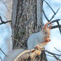Обед на ветке дерева :: Дмитрий Сушкин