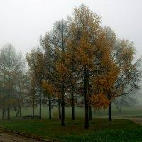 Туман в парке :: Николай Климович