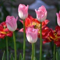 весна :: оксана л