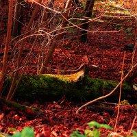 Красная Осень :: Алина Молчанова