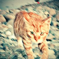 кот на пляже :: Nastya L