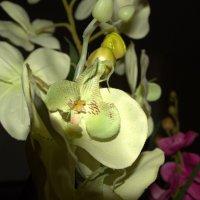 Орхидея :: Наталья Кузнецова