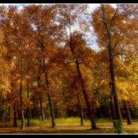 Northbrook Forrest. :: Gene Brumer