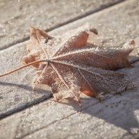 Зима на пороге. :: Анна Тихомирова