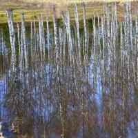 отражение весной :: Наталья