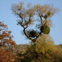 луна и дерево :: Надежда Лопатина