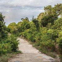 Дорожка в джунглях на закате :: Юлия Ростовцева