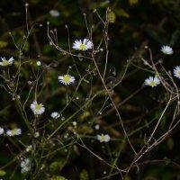 цветы :: Надежда Лопатина