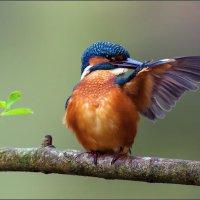 Colors of nature :: Ayman sadstar