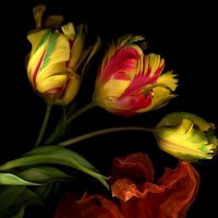 Flowers :: Ayman sadstar