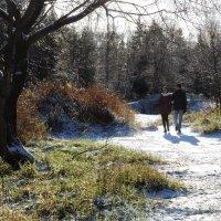 Первый снег :: sv.kaschuk