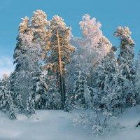 Зимний день на отдых собирается... :: Татьяна .