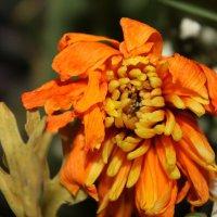 Цветы :: Юрий Антипов