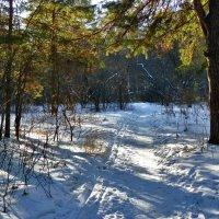 По первому снегу :: Александр Садовский