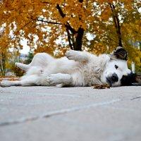 Удивительная собачка :: Ольга Ципко