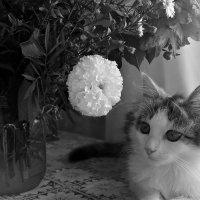 Кот и цветы :: Ирина Горбунова
