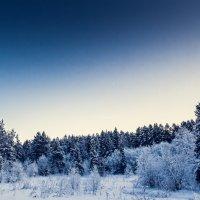 Зимний лес :: Vladimir Donchenko