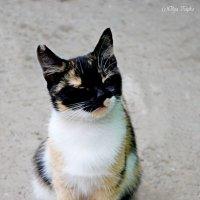 Кошечка :: Ольга Ципко