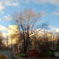 Пейзаж. :: Алина Климова