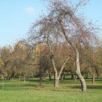 Лошицкий парк, г. Минск :: Павел Смоленков