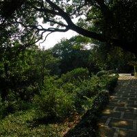 Никитский ботанический сад :: Алексей Свириденко