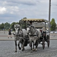 The Coachman, don`t ride the horses hard! :: Roman Ilnytskyi
