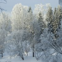 Холодюга! :: Александр Петров