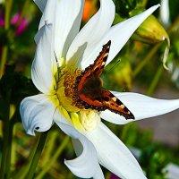 Повторяя форму цветка. :: Виталий Дарханов