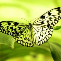 Как стеклянная бабочка, :: Виталий Дарханов
