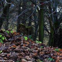 Увядающая,но такая прекрасная природа :: Алина Молчанова