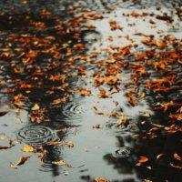 дождями :: Саша Ливень