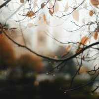 осень шепчет листьями :: Саша Ливень