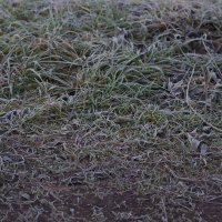 Трава покрытая изморозью :: G Nagaeva