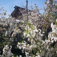 весна :: Anna Danilova