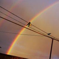 Двойная радуга :: Vladymyr Nastevych