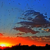 закат-птицы :: lev