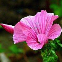 цветок :: юрий иванов