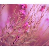 цветут цветы :: Настя Панькова