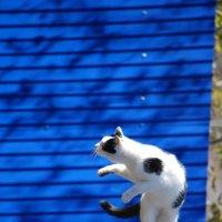 Танцующий кот :: Марина Пырсикова