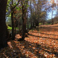 Осень :: Антон Б.
