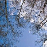небо осени :: зоя полянская