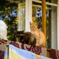 Три девицы под окном :: Андрей Домрачев