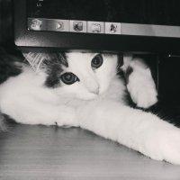 Играющий котенок :: Ирина Горбунова