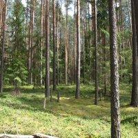В лесу :: Геннадий Кульков
