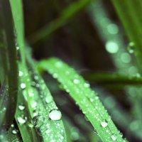 капли дождя :: Ирина Антонова