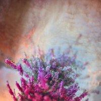 Цветочки для посадки :: Слава Ольшевская