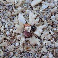 Ракушки на берегу Райского острова :: ViP_ Photographer