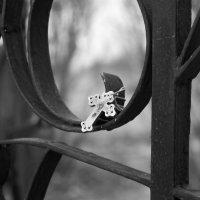 Потерялся... :: Ирина Чикида